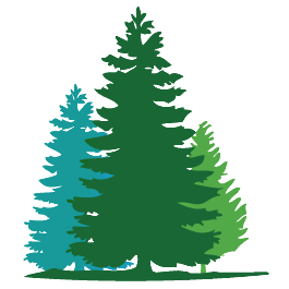 Fir Tree clipart Art Douglas Download Fir Clipart