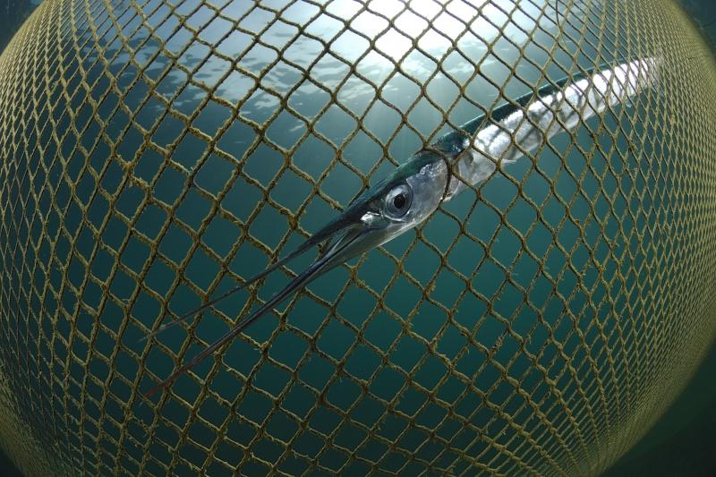 Fish Net clipart big Digital award Photos of amazing