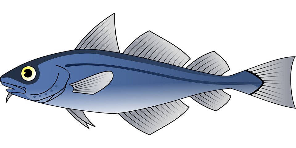Fins clipart fish food Drying Electric Second Tuna tuna