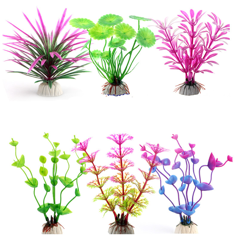 Anemone clipart fish tank plant Plants Glowing Wholesale Water from