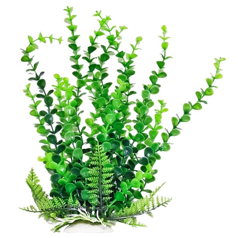 Anemone clipart fish tank plant  Fish Discount Plants Tank