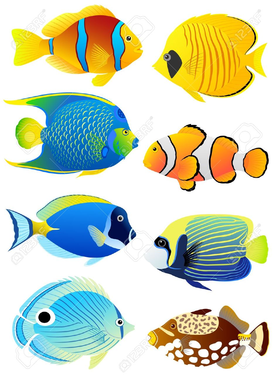 Angelfish clipart colourful fish Royalty Colorful Collection Illustration Royalty