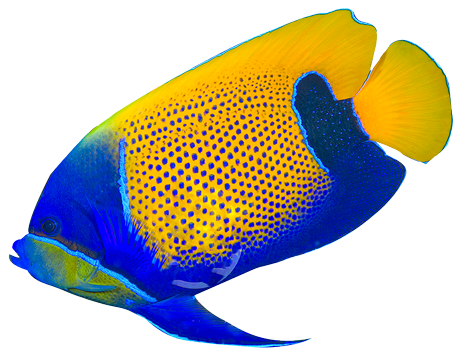 Butterflyfish clipart realistic fish Fish tropical%20fish%20clipart Clipart Tropical Clipart