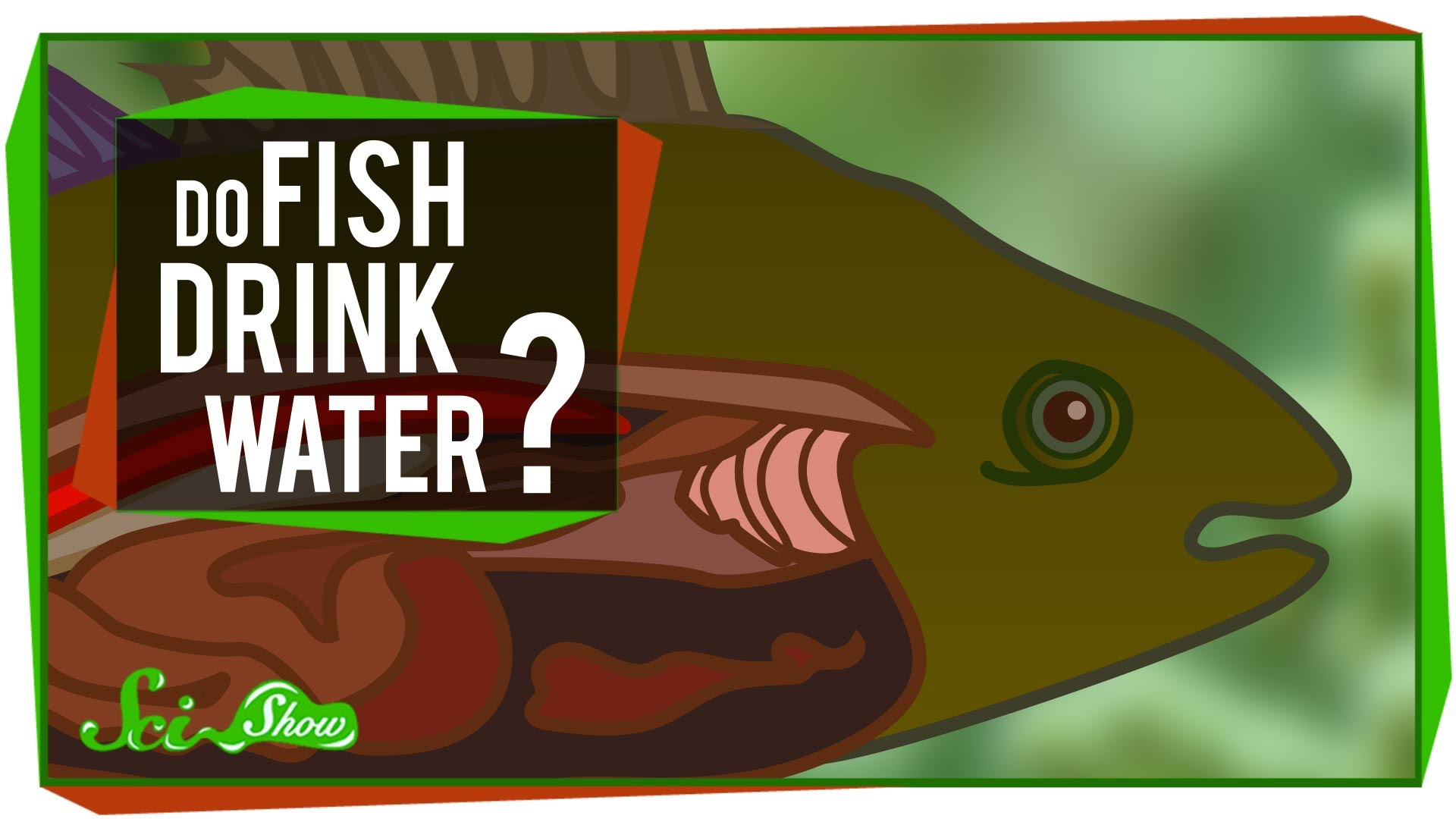 Please clipart may i drink water Do YouTube  Drink Fish