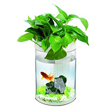 Aquarium clipart ecosystems Transparent Fish LED Remote Remote