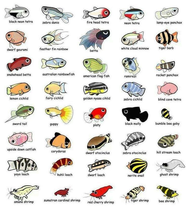Betta clipart freshwater fish 1111 Aquarium Fish & images