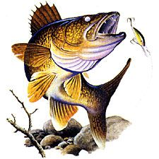 Trout clipart walleye #11