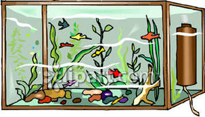 Fishtank clipart Clipart Clipart Aquarium 300x171 aquarium