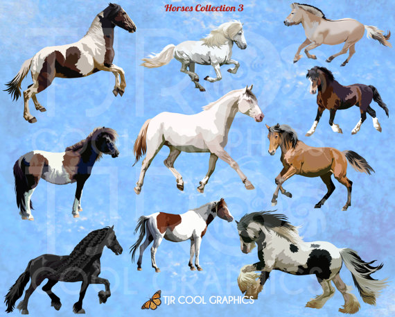 Fjord clipart Fjord Horse Clipart On Printable PNG Chincoteague warmblood