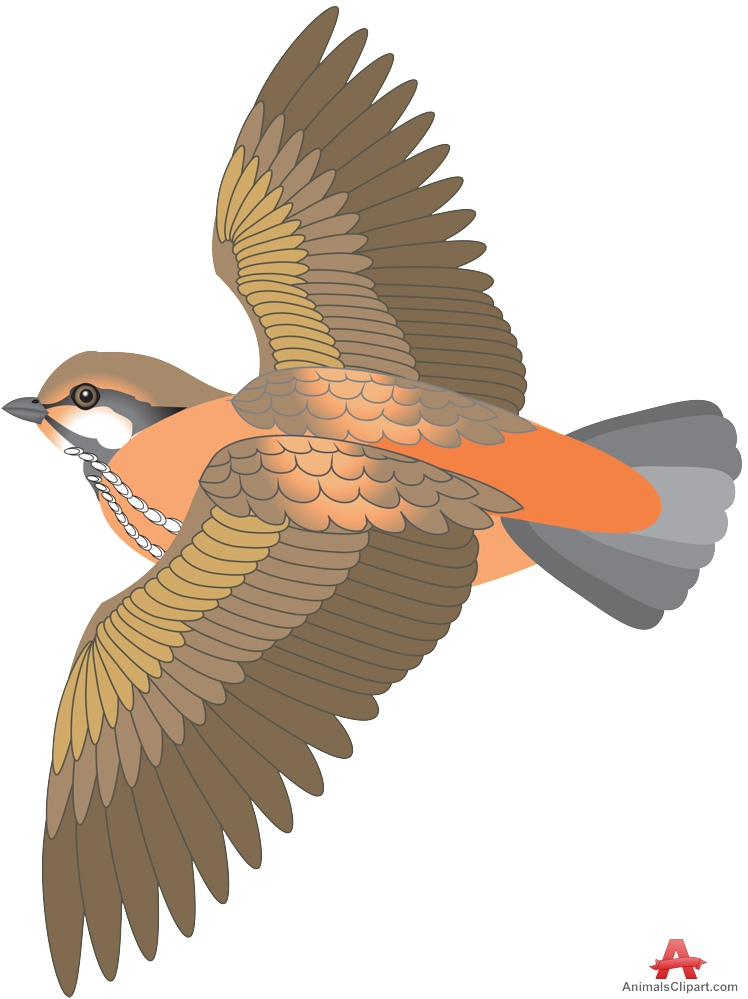 Brds clipart bird fly With of flight Clipart Wings