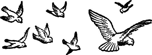 Brds clipart black and white Panda Fly And White Clipart