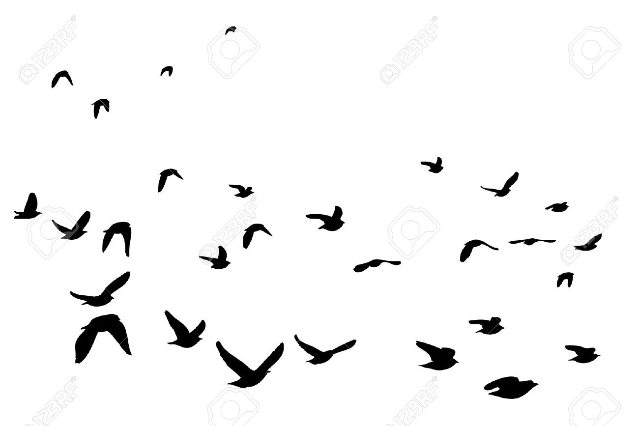 Flock Of Birds clipart Bird Clipart  Silhouette Flock