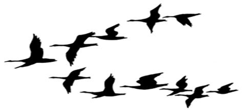 Brds clipart goose – Download Flock Geese Clipart