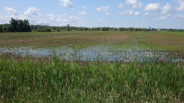 Flooded clipart farmer Farmers money Fields North