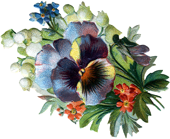 Pansy clipart vintage #4