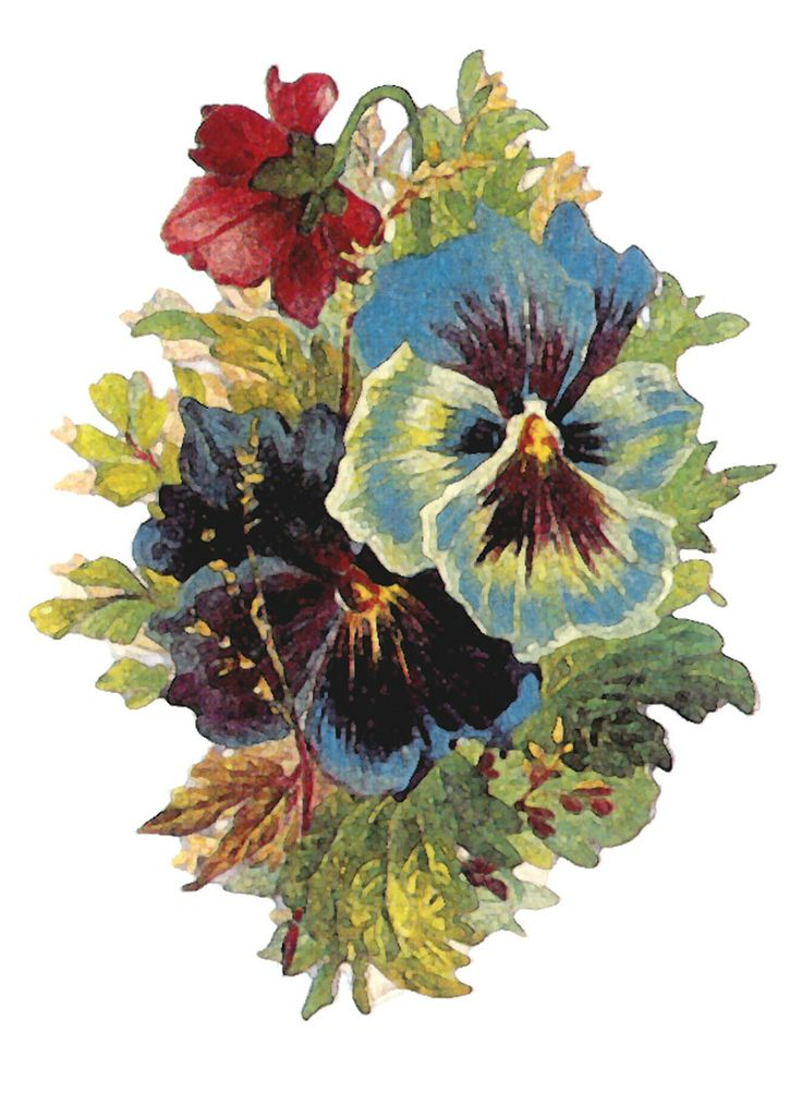 Pansy clipart cartoon Art Art: ArtbyJean flower Vintage