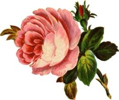 Rose clipart antique flower #1