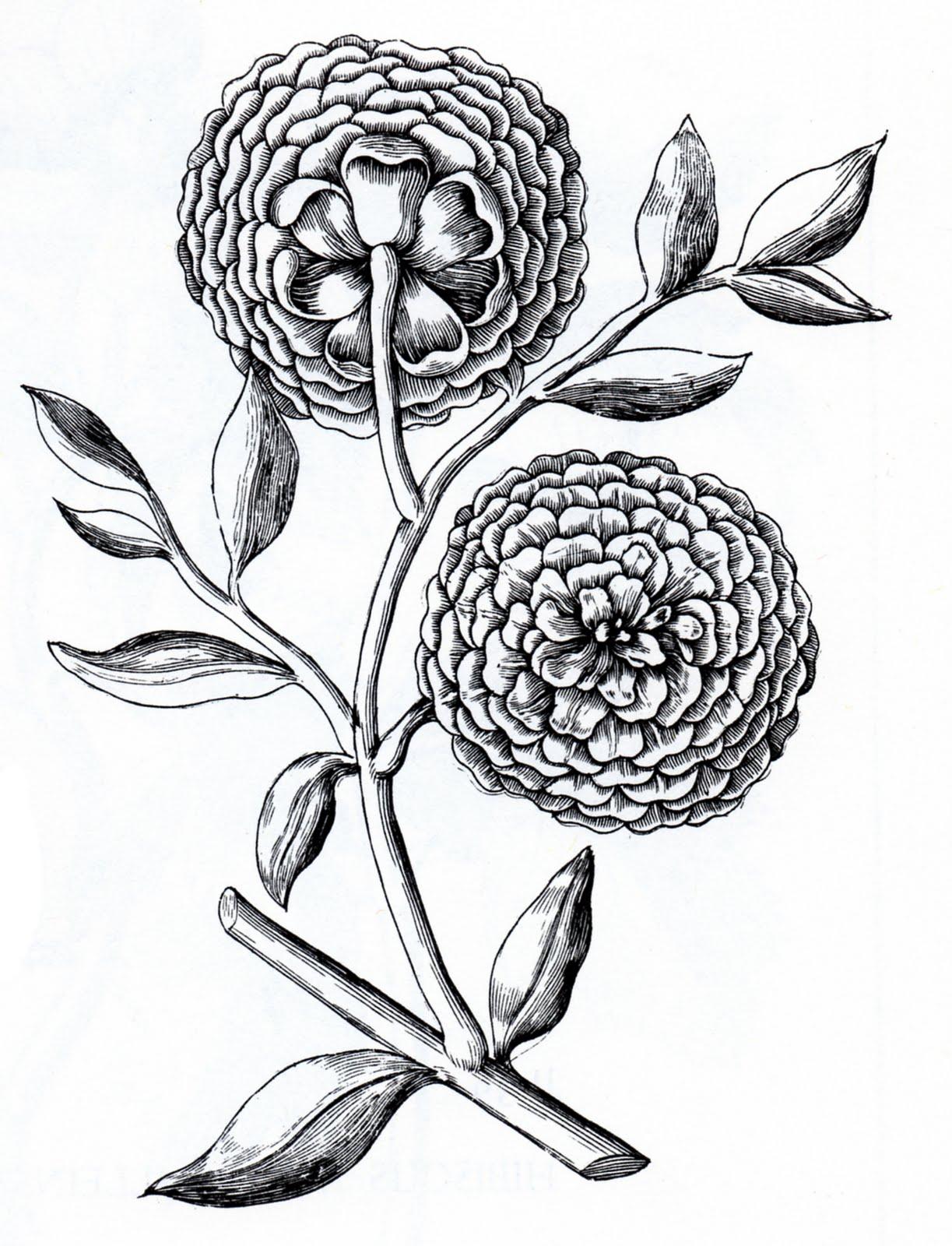 Vintage Flower clipart illustration Floral Vintage Floral Moth Clip