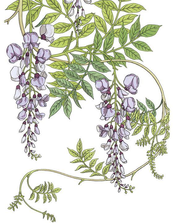 Floral clipart art deco Best CD Dover Publications Nouveau