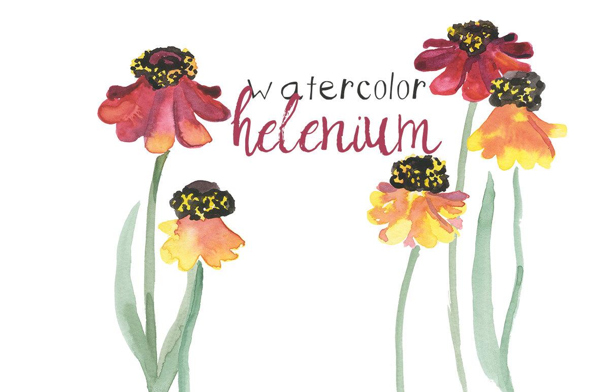 Floral clipart autumn flower Helenium  INSTANT Floral Commercial