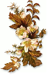 Floral clipart autumn flower Free Clipart fall flowers Floral