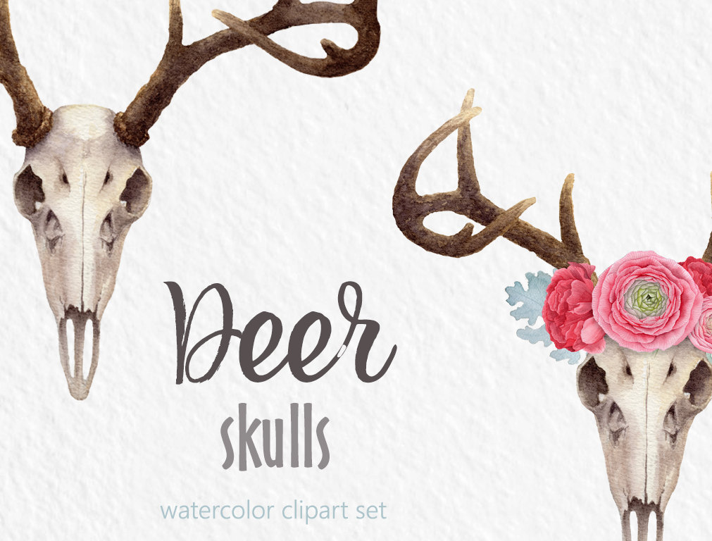 Antler clipart watercolor Watercolor floral skull painted Deer