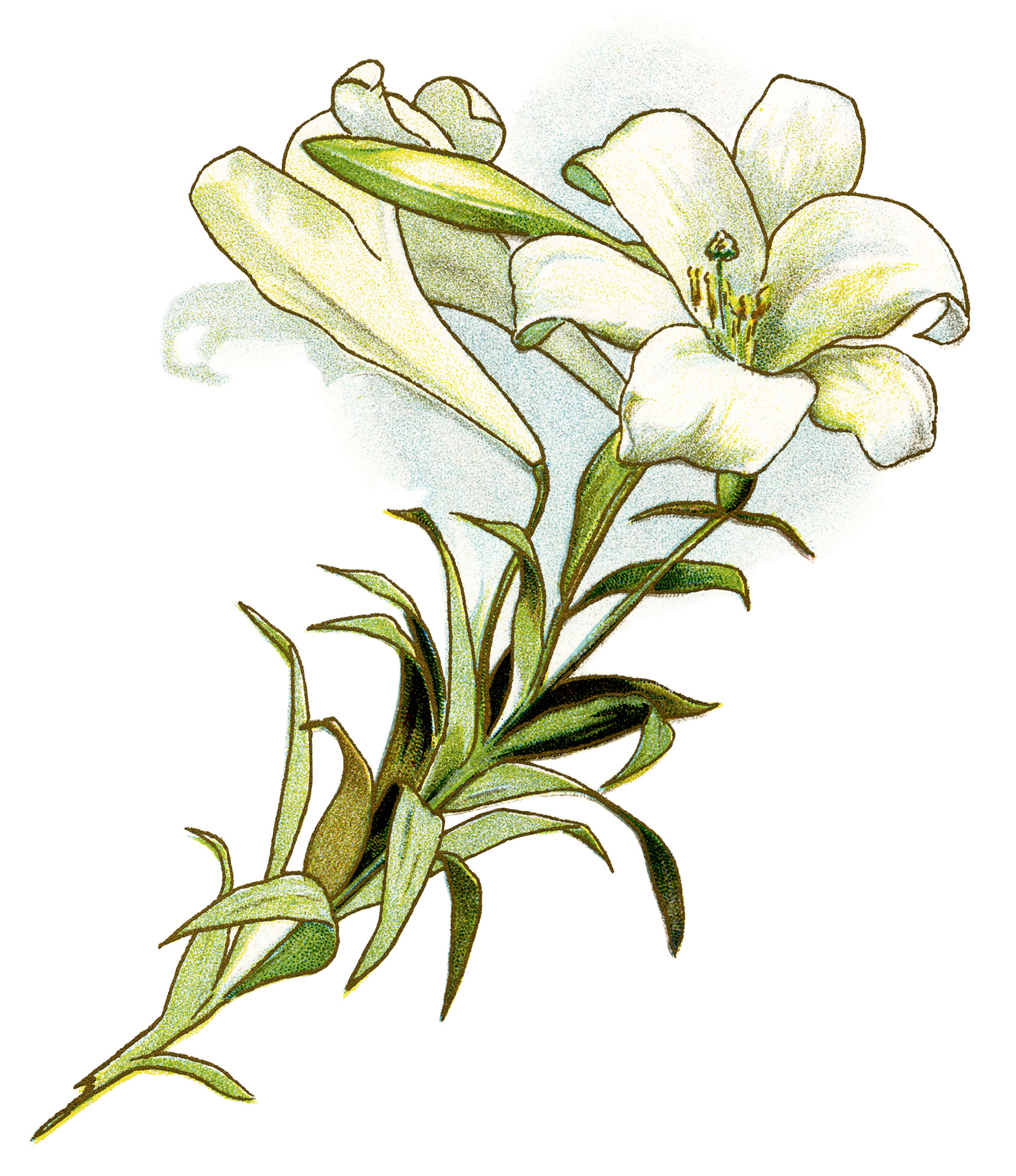 Beautiful clipart easter lily Art clipart Vintage image easter