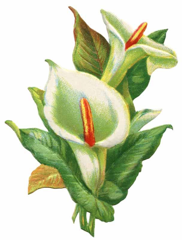 Vintage Flower clipart church flower #10