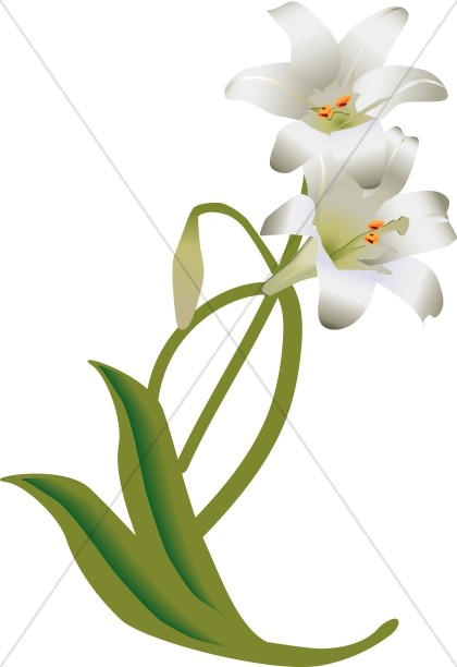 Elower clipart white lily Flower Graphic Easter Flowers Decoration