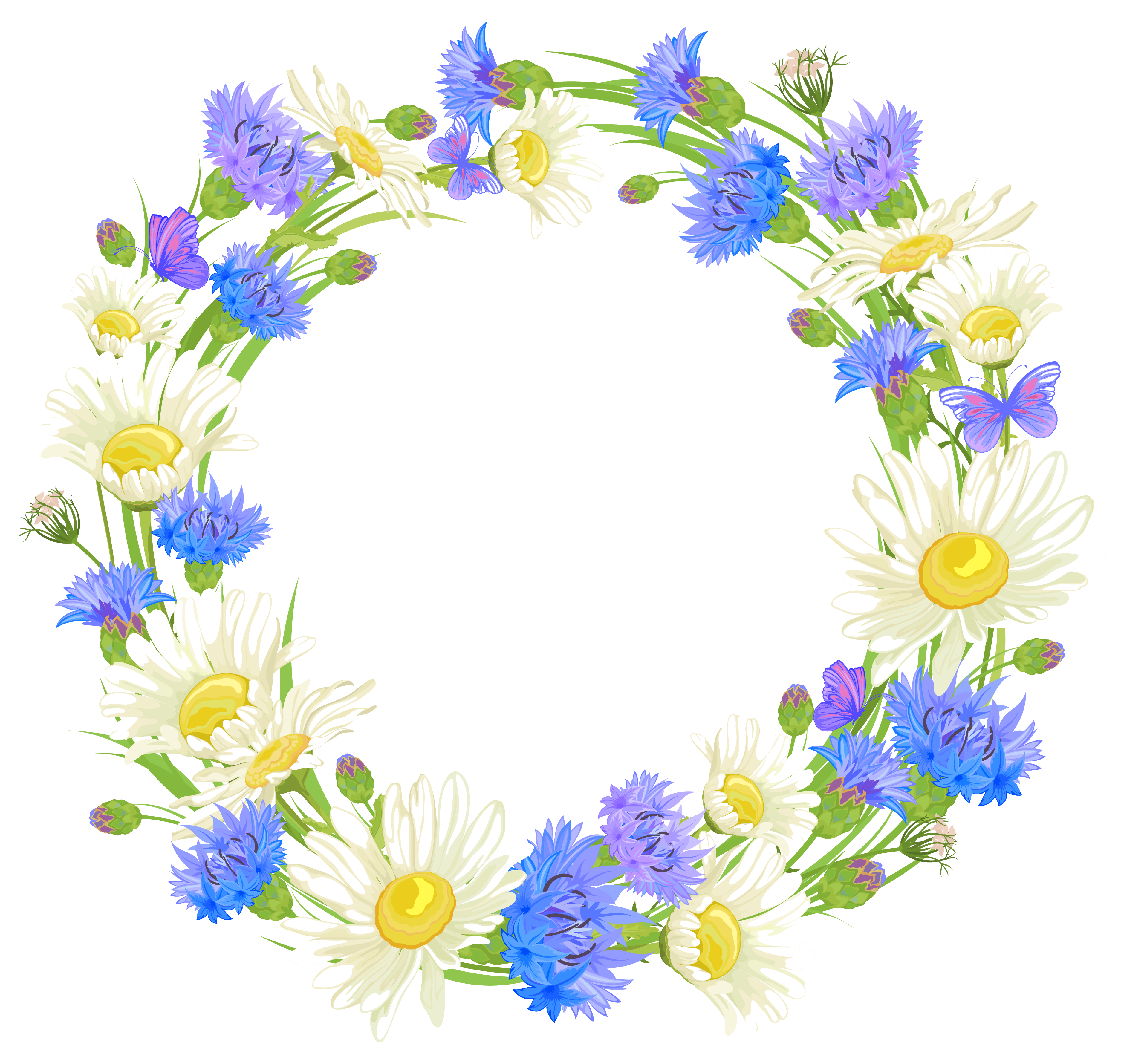 Camomile clipart real  png flowers Backgrounds clipart