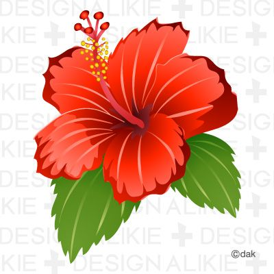 Plant clipart gumamela On Art Flowers Clip