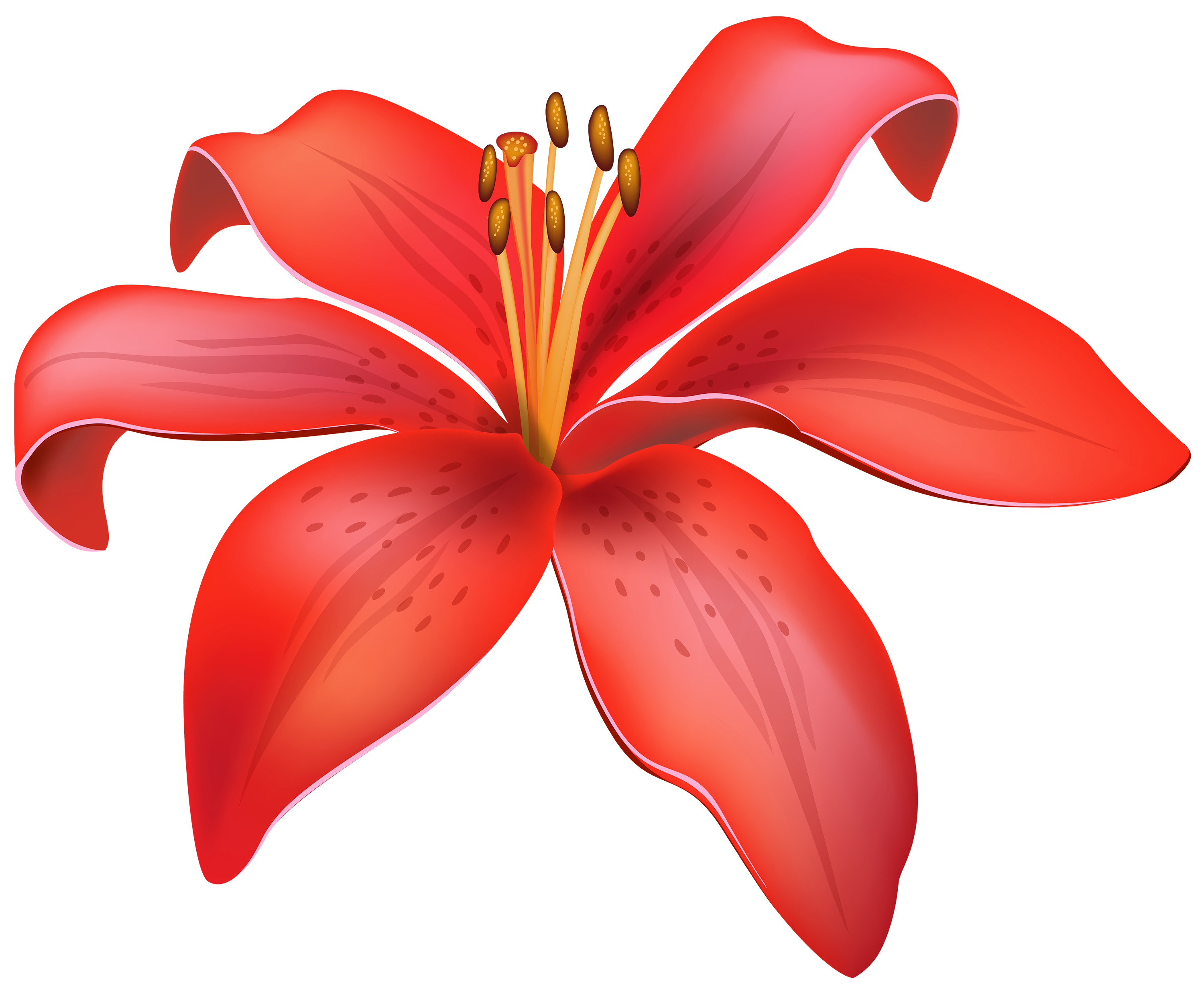 Floral clipart lily CLIPART CLIPART WEB Red Clipart