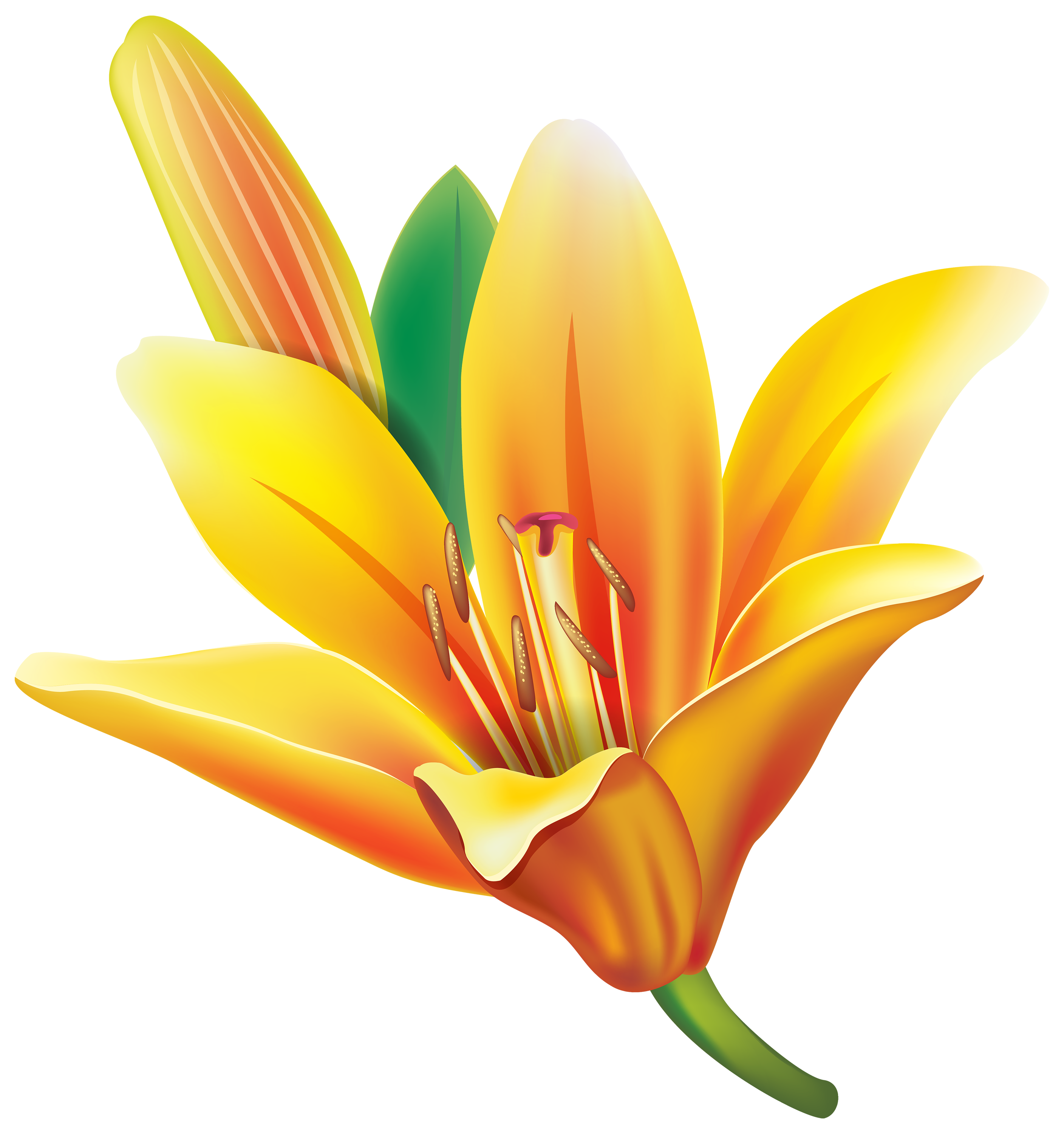 Floral clipart lily Yellow El Flower Lily PNG