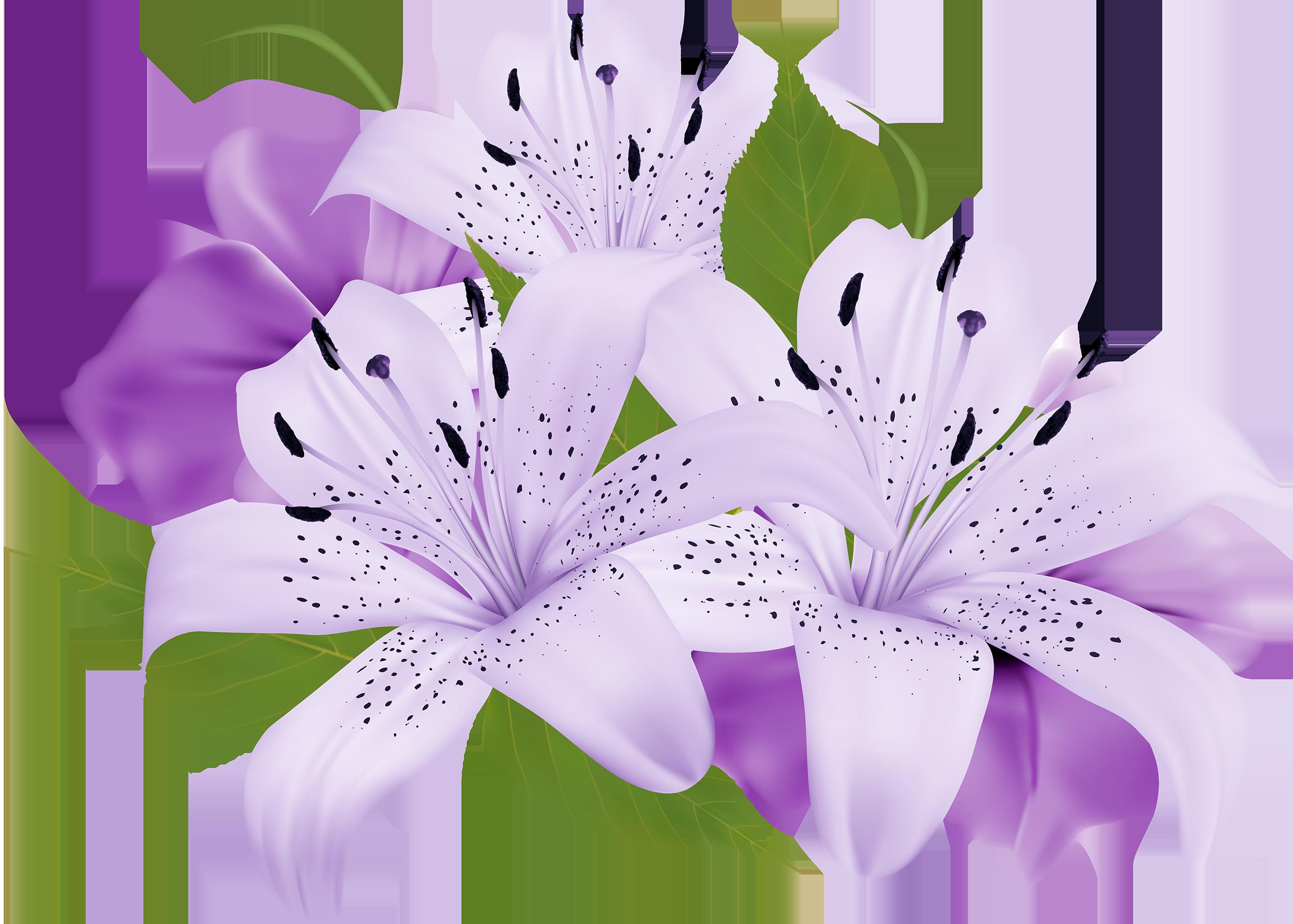 Decoration clipart pretty flower Pinterest PNG  Decorative Flowers