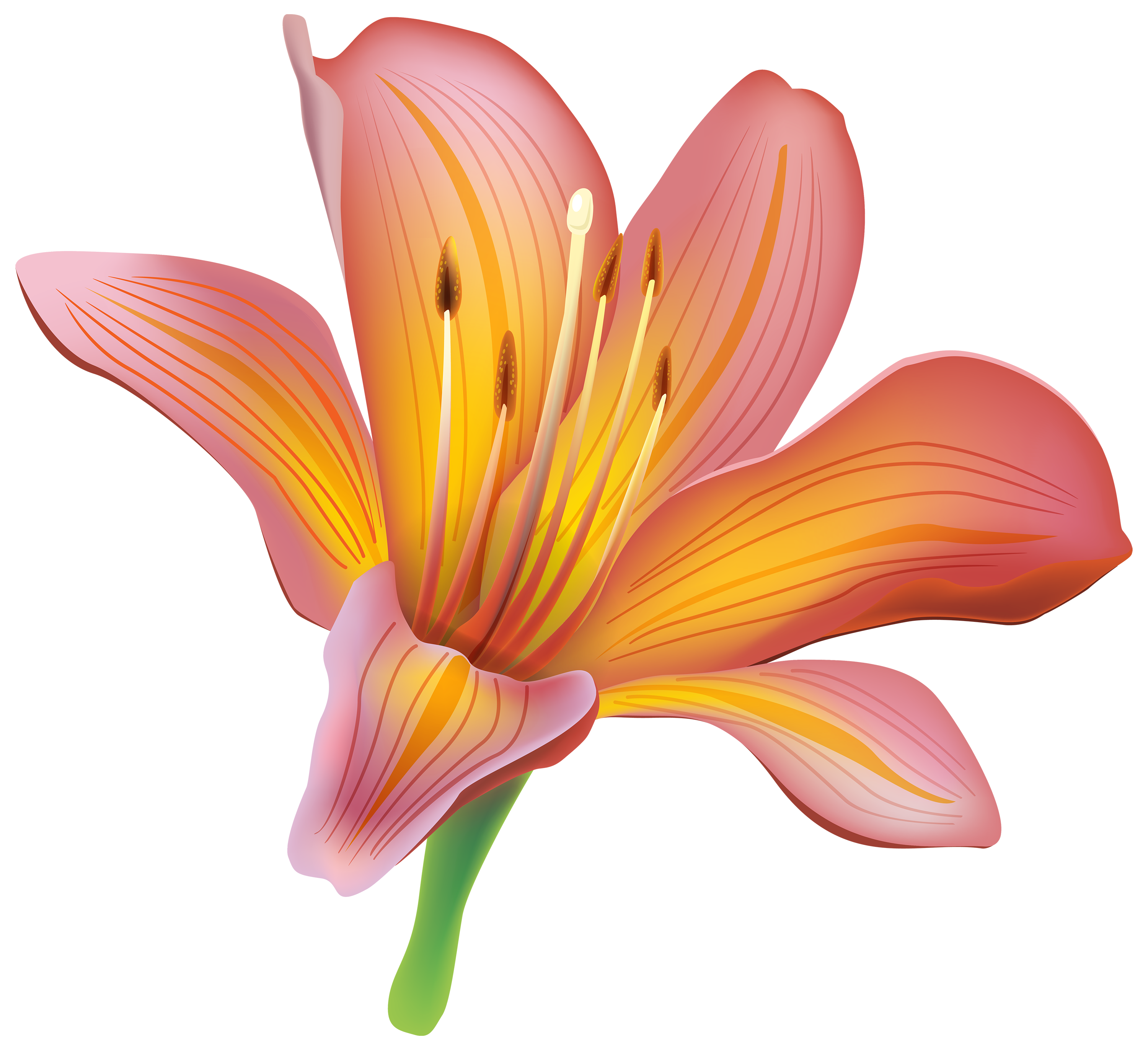 Floral clipart lily Lily clipart lilies collection flowers