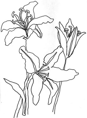 Drawn vintage flower line drawn FlowersContinuous drawings Line 25+ SketchesDrawing