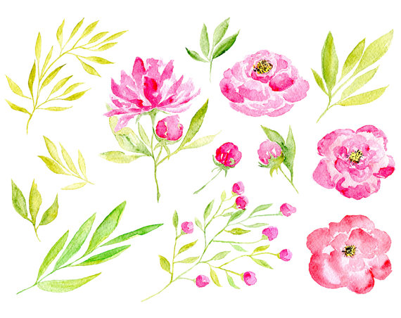 Floral clipart pink flower Flower red purple peony
