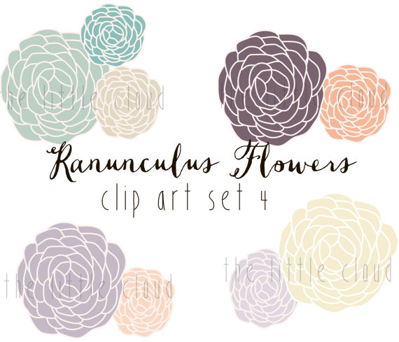 Ranuncula clipart modern flower To  vector Art png