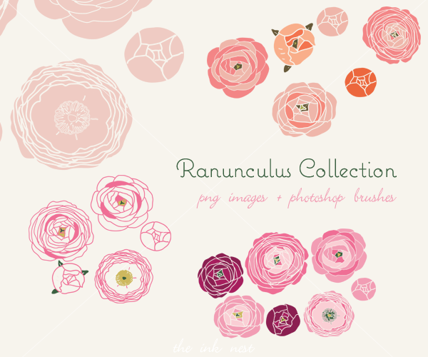 Ranuncula clipart hand drawn flower  brushes Collection photoshop and