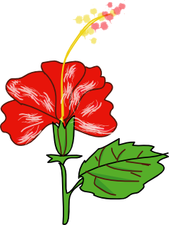 Plant clipart flowering plant Free Clipart a And hibiscus