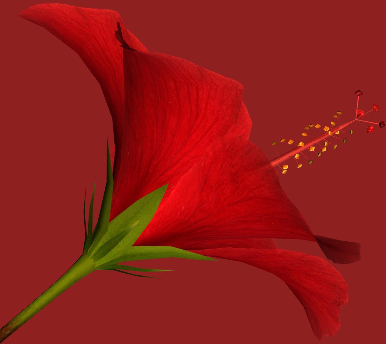 Tropics clipart hibiscus flower #14
