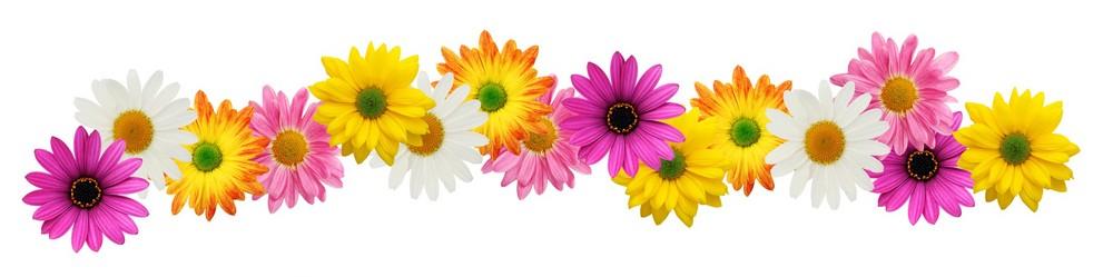 Yellow Flower clipart springtime flower Border Free flower spring flower