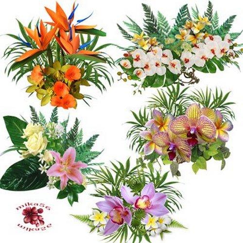 Floral clipart transparent background Png on PNG PNG transparent