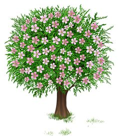 Floral clipart tree Google flowers clipart bloom bloom