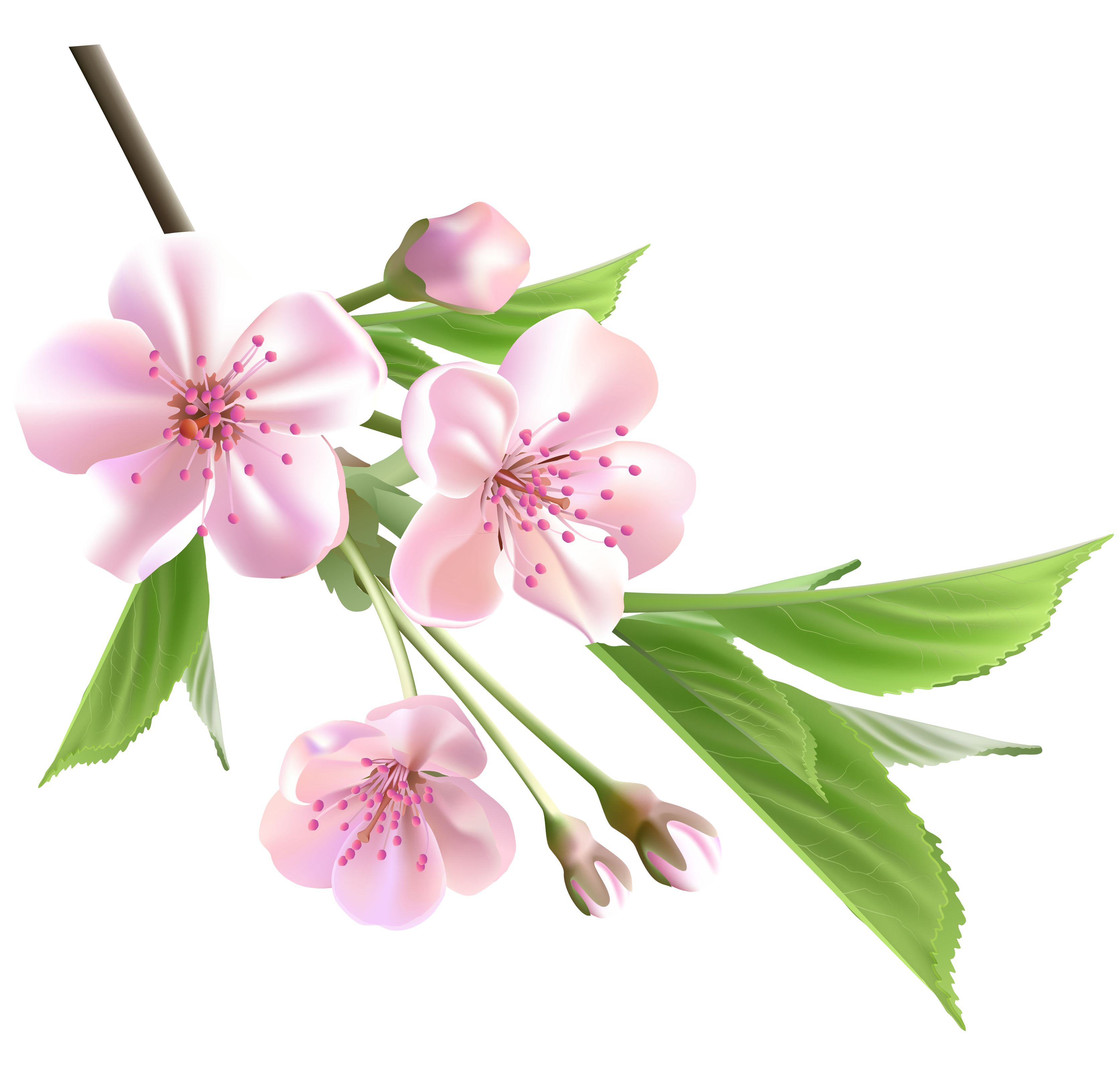 Floral clipart tree Clipart this more  on