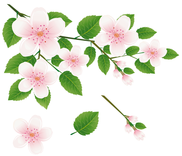 Floral clipart tree PNG Tree Flowers with White