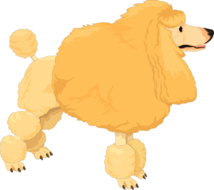 Fluffy clipart Fluffy art Poodle Fluffy clip