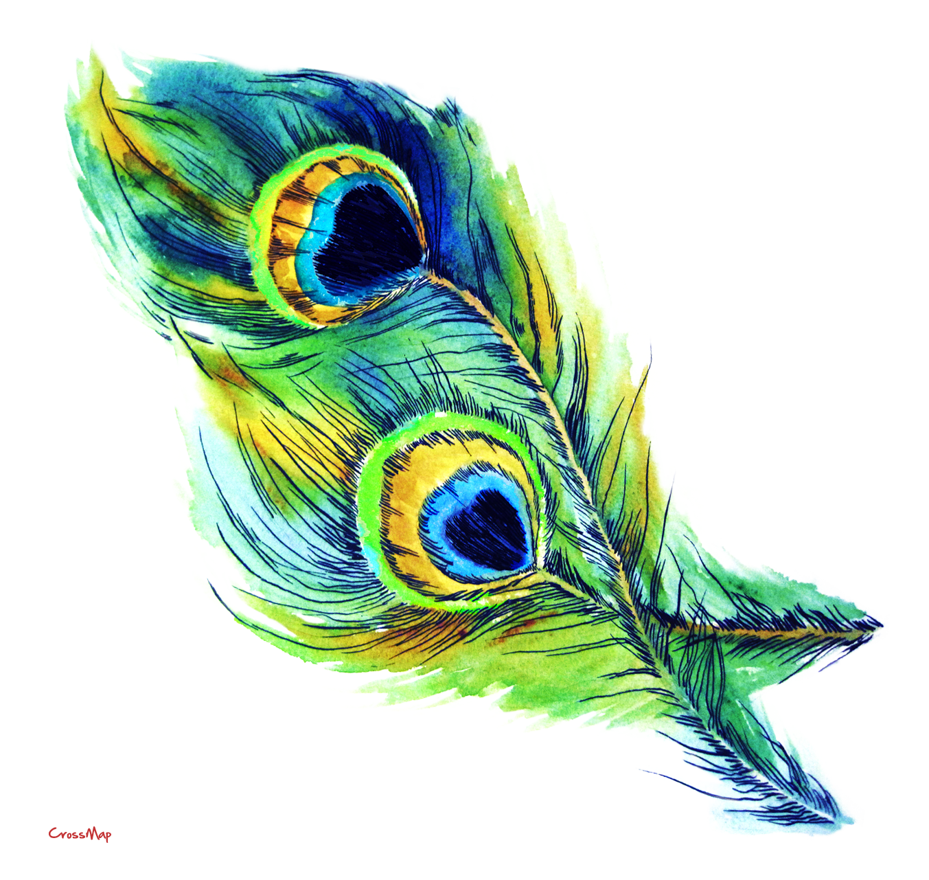 Pen clipart peacock feather Free  Tribal Peacock library