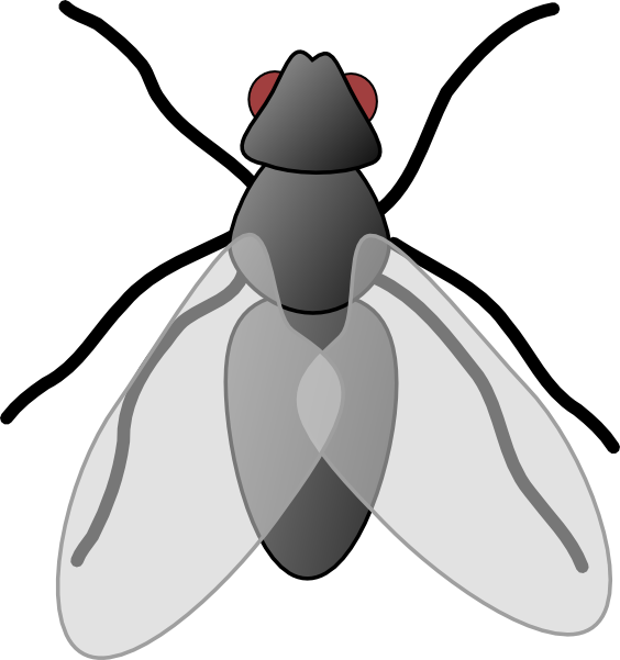 Fly clipart Clip Free Art Clip Clipart