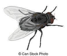 Fly clipart Images on  Fly 340
